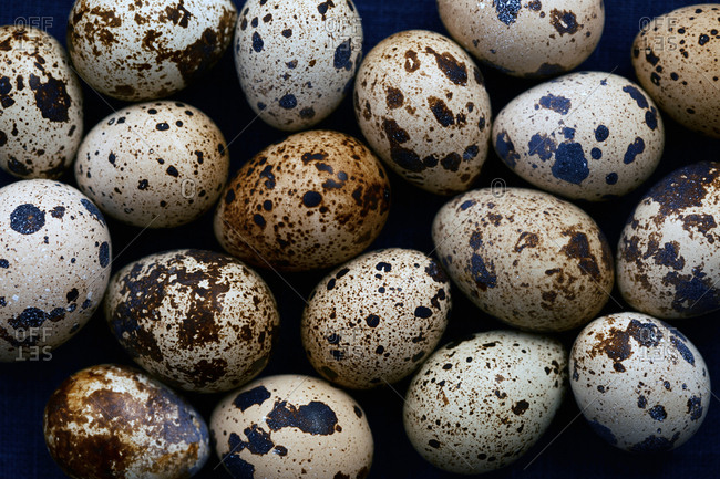 Close-up view on quail eggs