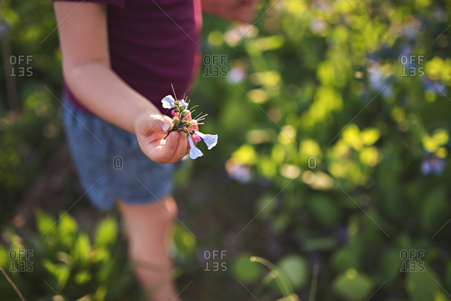 Close up of child's hand picking flowers