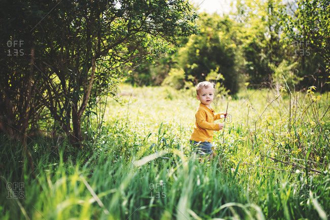 Toddler boy picking dandelions in tall grass