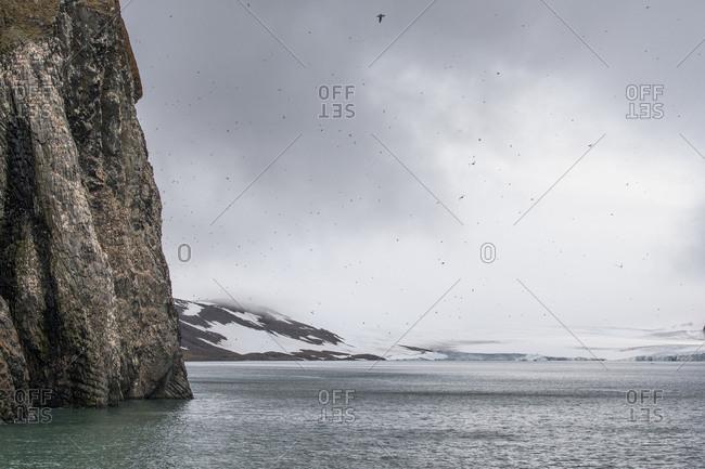 Birds flying over the ocean off the coast of Franz Josef Land