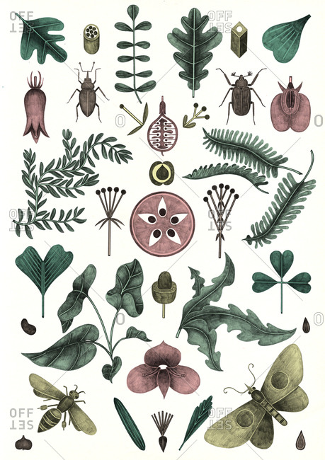 Illustration of items found in nature