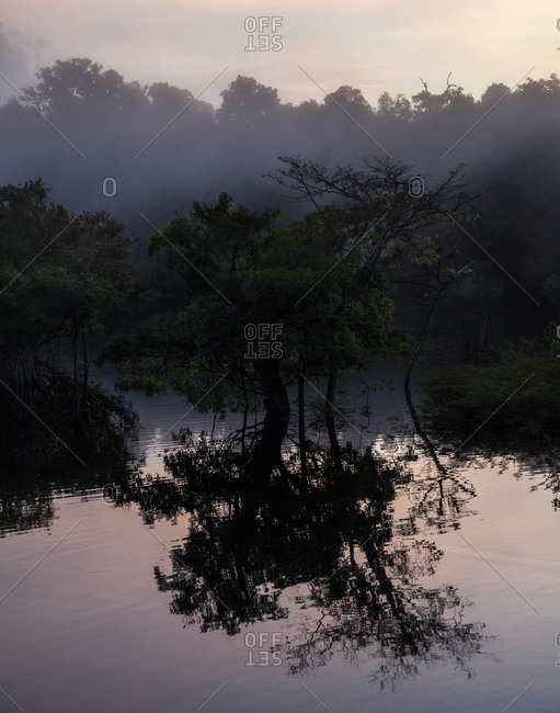 Morning mist in jungle on the Amazon River