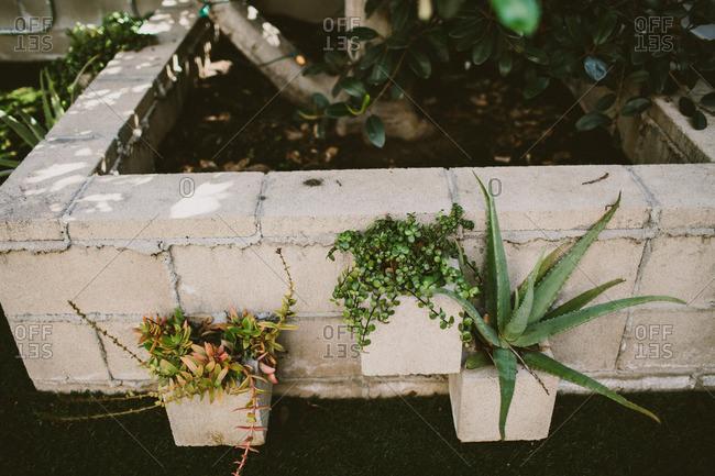 Outdoor succulent planters.