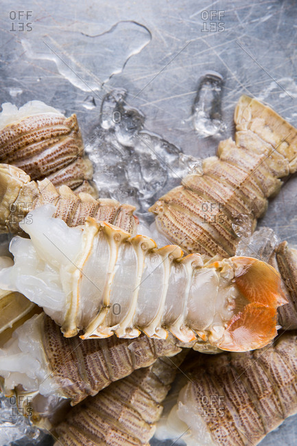 Lobster tails with ice