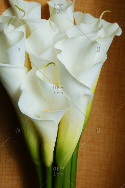 A calla lily bunch
