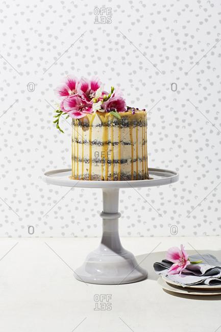 Chocolate cake with espresso icing