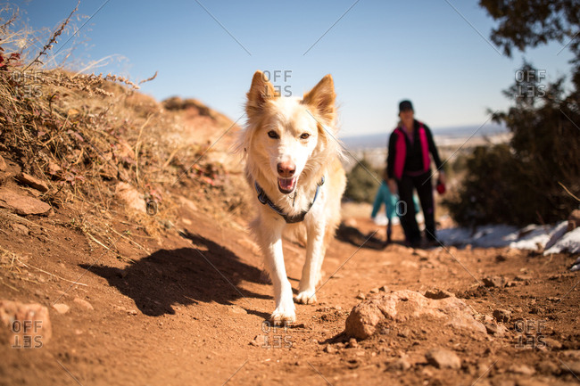 Dog walking on trail
