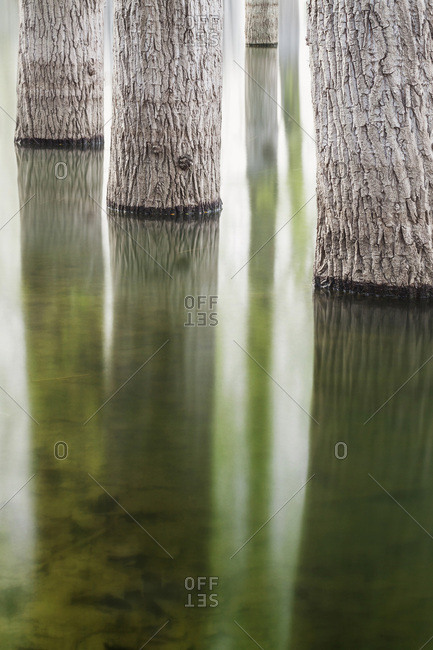 Detail of tree trunks reflected in Lago di Canterno in the Province of Frosinone in Lazio, Italy