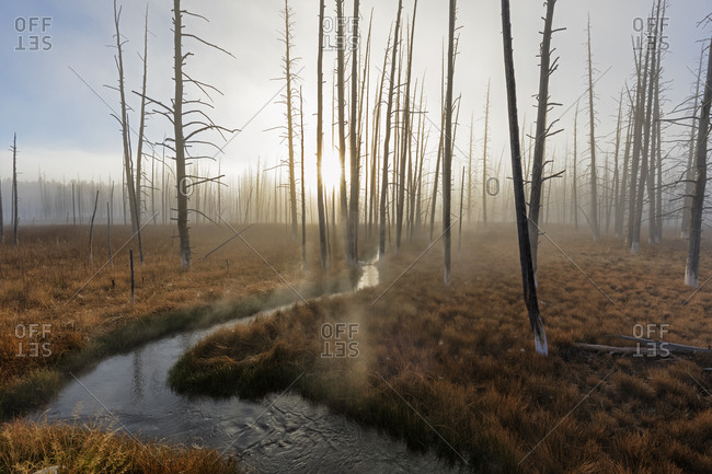 USA- Yellowstone National Park- creek winding through forest with dead trees