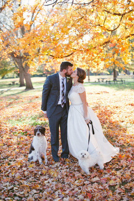 Kissing bridal couple with dogs