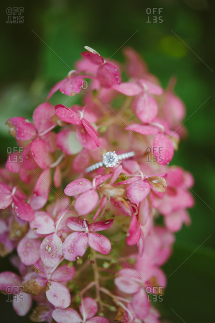 Engagement ring on floral blossoms