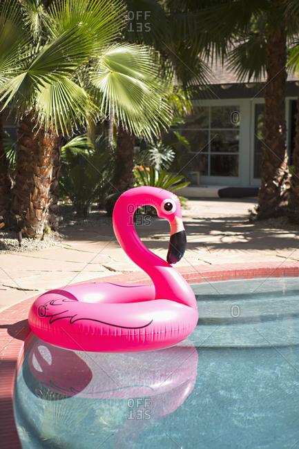 Flamingo ring float in pool