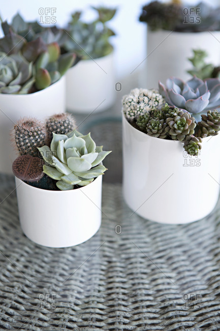 Pots of cactus and succulent plants on wicker table