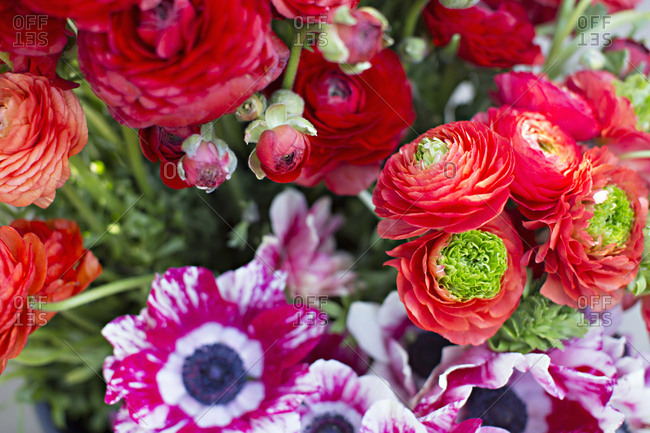 Red ranunculus flowers and poppies