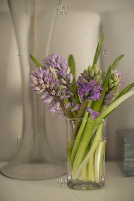 Hyacinth flowers in glass vase