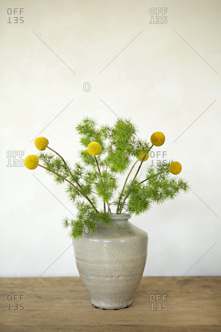 Arrangement of yellow craspedia flowers and green fuzzy fronds