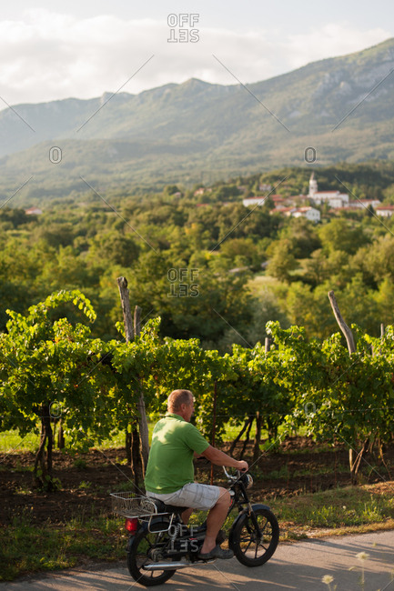 Vipava Valley, Slovenia - July 22, 2015: Man riding bike by a vineyard