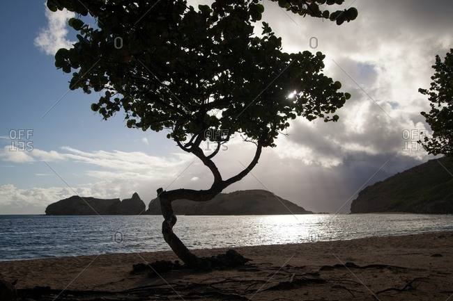 Silhouette of tree on the ocean shore