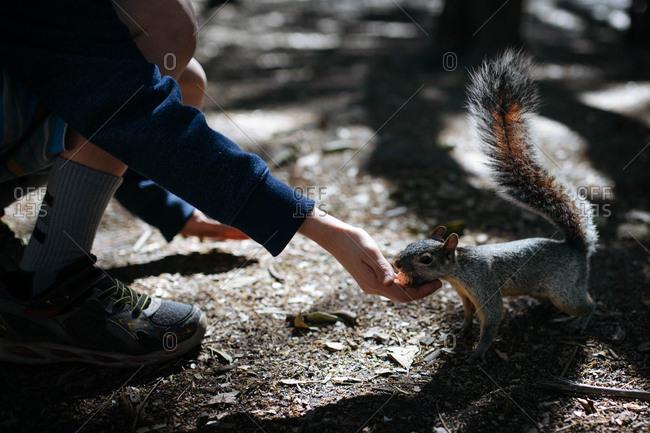 Little boy feeding a squirrel