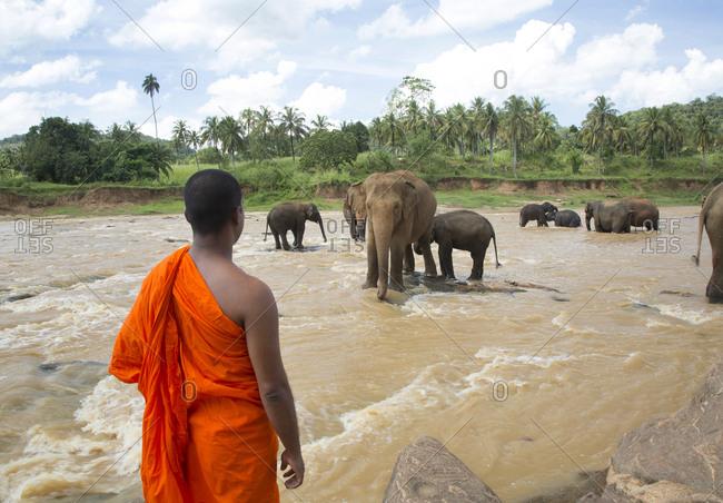 Elephant orphanage in Maha Oya River, Pinnawala Sri lank