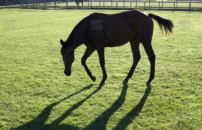 Horse grazing in Seattle, Washington