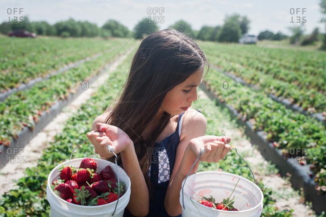 Girl lifting two buckets full of freshly picked strawberries on farm
