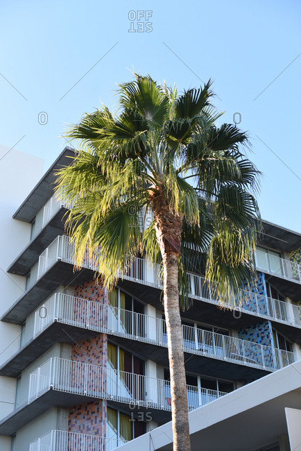 Palm tree outside of a multi-story hotel with balconies