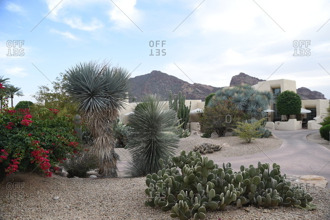 Cactuses and flowering bushes in a garden at a desert home