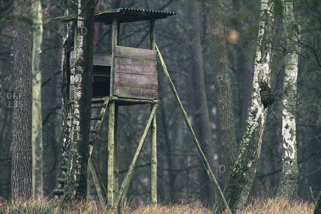 High seat for deer hunting in forest.