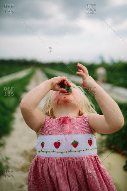 Toddler girl tilts her head back to eat strawberry