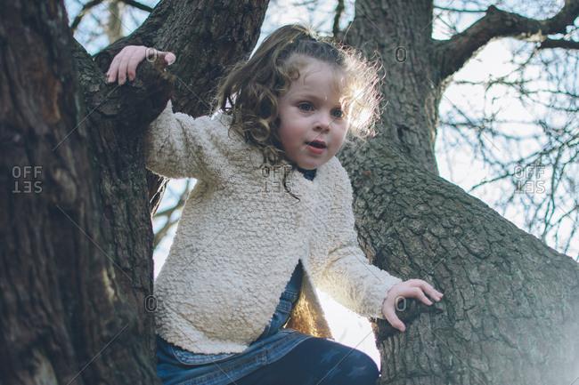 Preschooler climbing tree