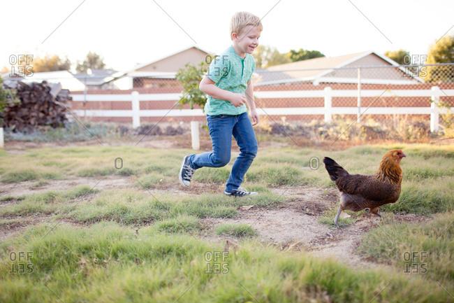 Boy chasing chicken on a farm