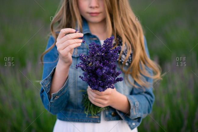 Girl holding a bunch of freshly picked lavender flowers