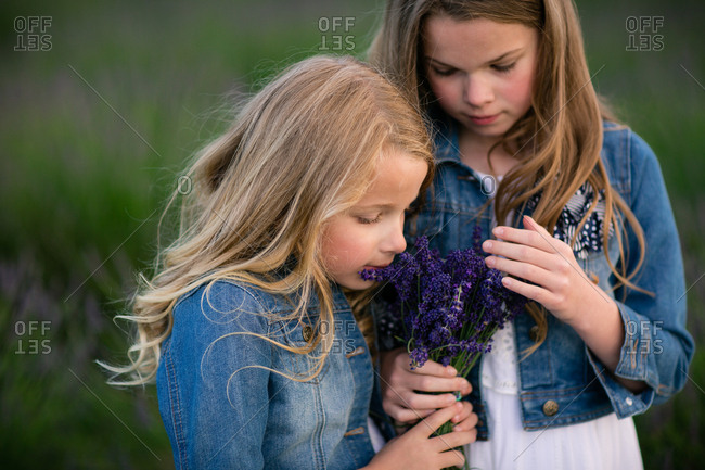 Girl smelling a bunch of freshly picked lavender flowers held by her sister