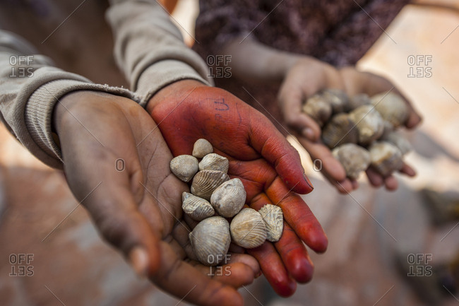 Ethiopia, Tigray . sellers of fossil shells at Wukro
