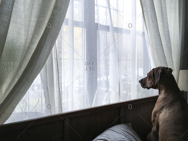 Dog sitting on bed looking out window