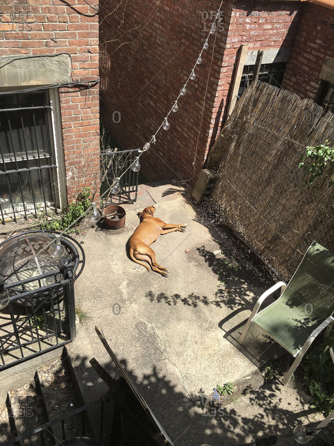High angle view of dog lying on backyard patio
