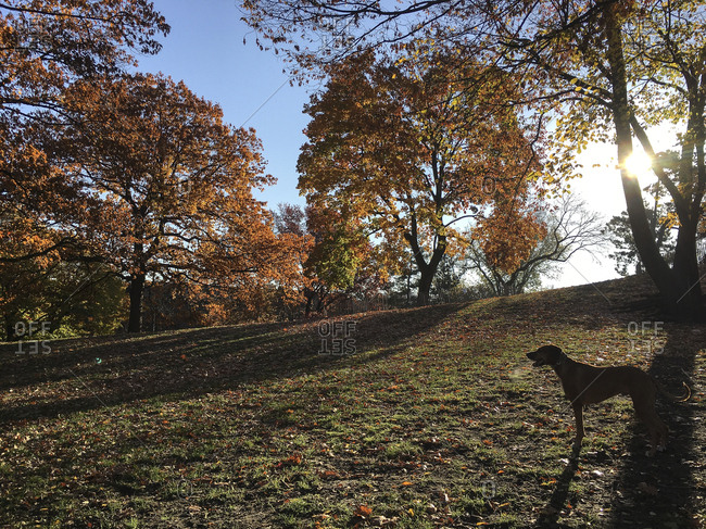 Silhouette of dog in a park with fall leaves