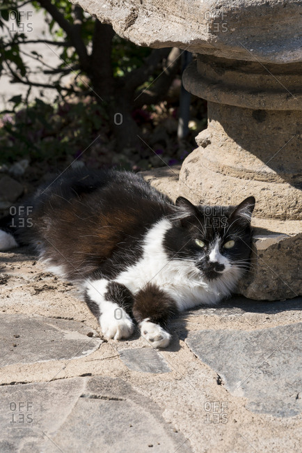 Black and white cat relaxing outdoors