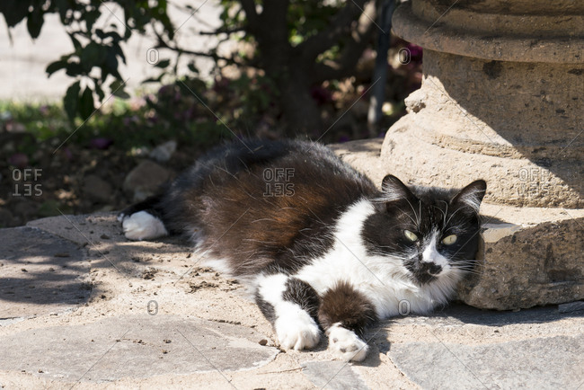 Black and white cat relaxing in sunlight outdoors