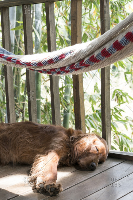 Dog asleep under a hammock on a wooden porch