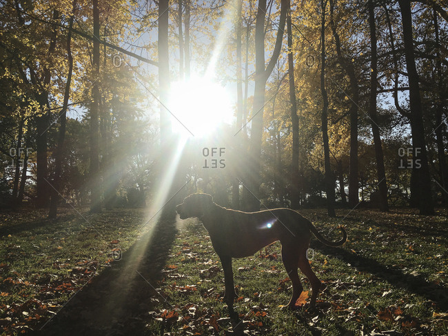 Silhouette of dog in a park on a sunny day
