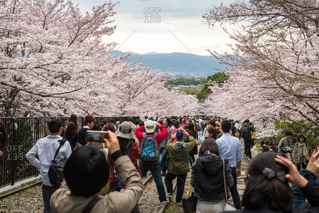 Kyoto, Japan - April 2, 2016: Keage incline with cherry blossoms, Kyoto