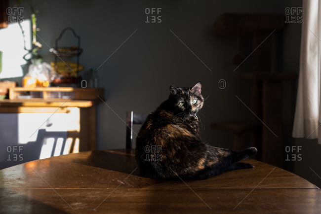 Cat lying in sunlight on table