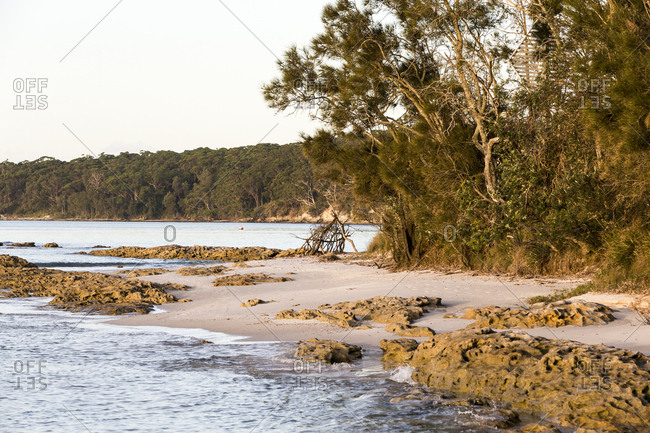 Trees and coastline at Jervis Bay