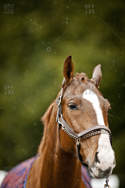 Horse wearing a bridle