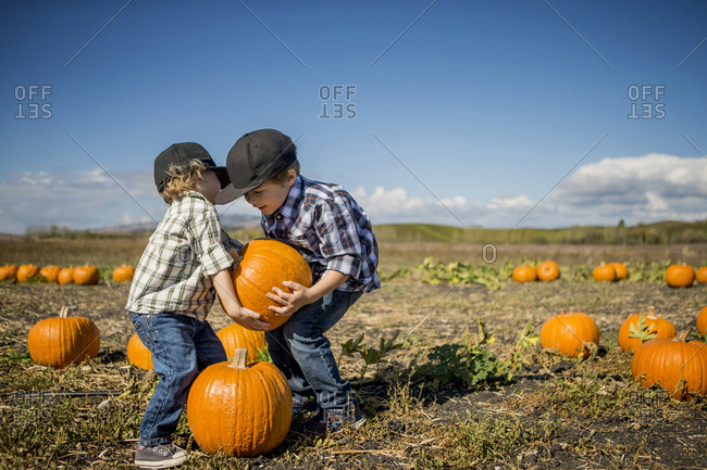 Two young boys choosing a pumpkin from a field