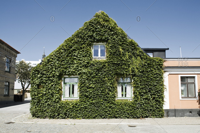 Ivy covered house in city against clear blue sky