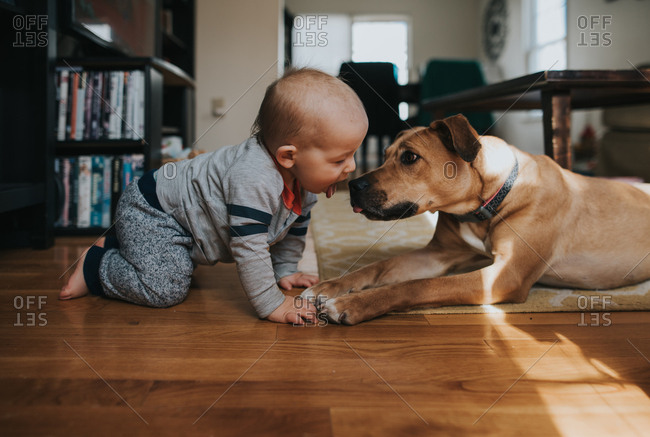 Toddler boy holding his tongue out to his pet dog