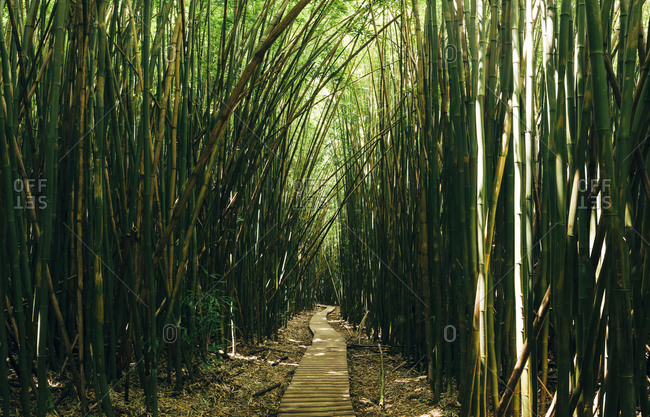 Boardwalk amidst bamboo trees in forest